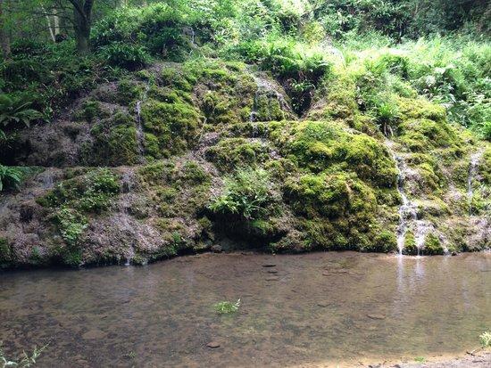Hackfall Woods: The Alum springs