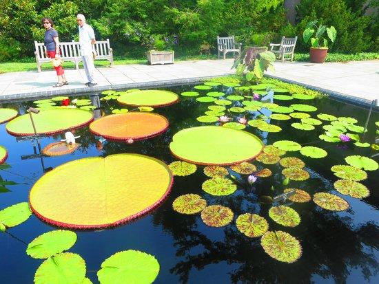 Longwood Gardens: Longwood