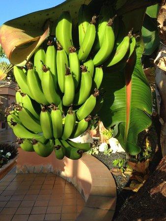 Green Garden Resort & Suites: VERY Fresh Fruit