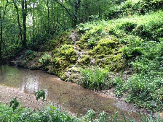 Hackfall Woods: The Alum Spring