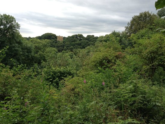 Hackfall Woods: View along the Ure valley