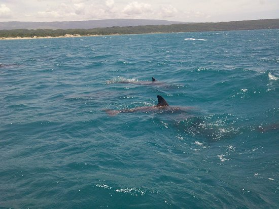 Floyd's Pelican Bar: These Dolphins followed us for miles