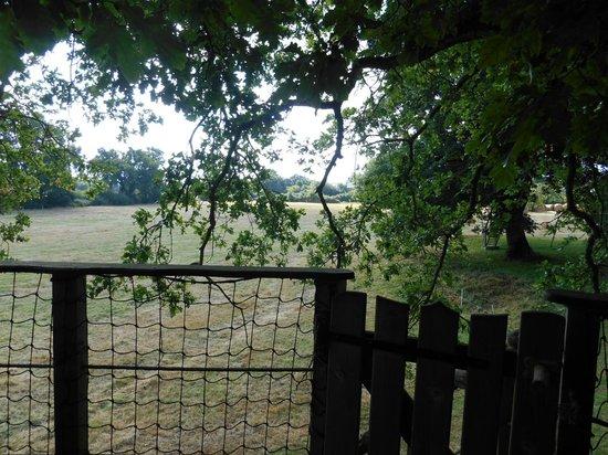 Cabanes Dans les Arbres Brin de Chevrette : Terrasse