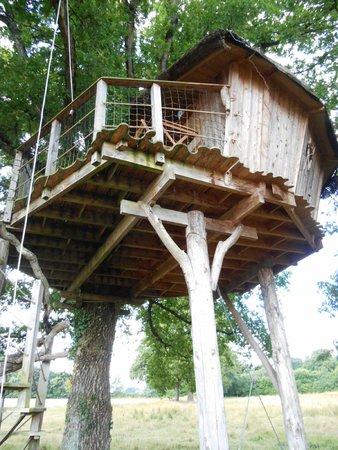 Cabanes Dans les Arbres Brin de Chevrette : Vue d'ensemble