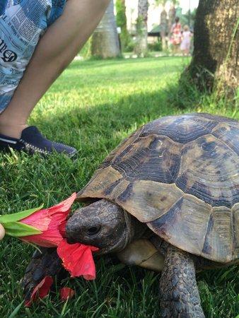 Adora Golf Resort Hotel: Любимое децццкое развлечение: обдирать цвет и кормить черепах.