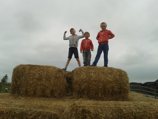 Thornton Hall Farm Country Park: Kings of the hay stack