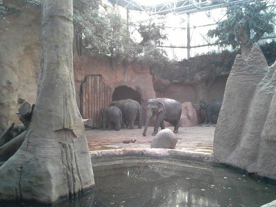Rotterdam Zoo: olifantenverblijf
