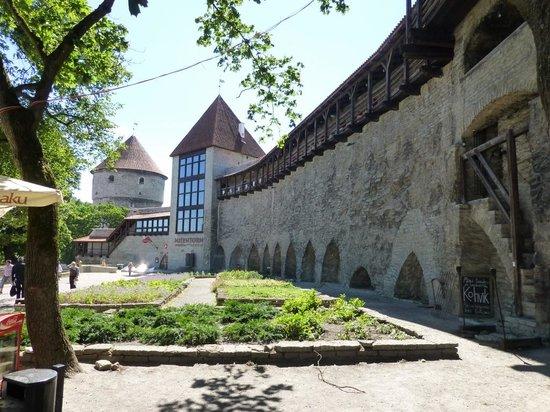 Ayuntamiento: Muralhas da cidade antiga de Tallinn