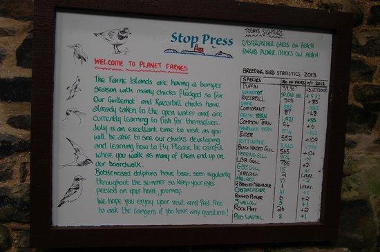 Farne Islands: The arrivals board.