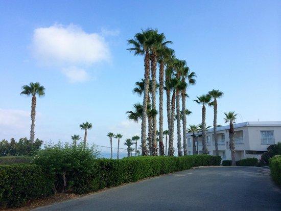 Cynthiana Beach Hotel : Вид с дороги