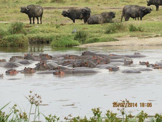 Keekorok Lodge-Sun Africa Hotels: Hippo Lake
