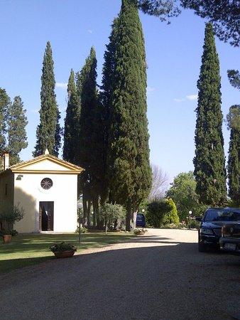 Relais Villa Petrischio : Ciprestes