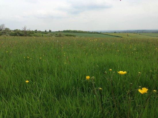 Green Farm: The wild-flower meadow...