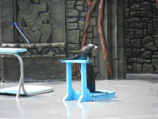 Chankanaab Beach Adventure Park: Sea Lion Show