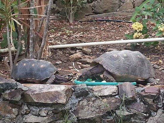 The Green Iguana Hotel : Hotel Turtles