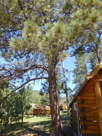 Horse Thief Campground : cabins