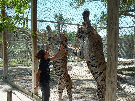 McCarthy's Wildlife Sanctuary: Kara and Tigers
