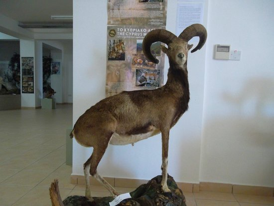 The Museum of Natural History, Pomos