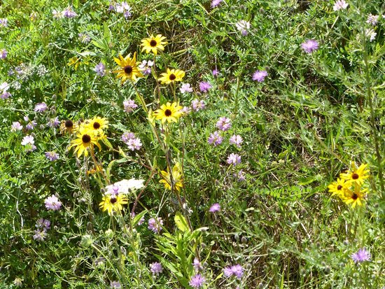 Steamtown National Historic Site: Wildflowers along the train tracks