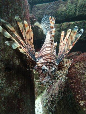 Blue Planet Aquarium : Scary, poisonous fish