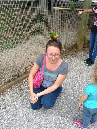 Kentucky Down Under Adventure Zoo: This bird really liked my hair!