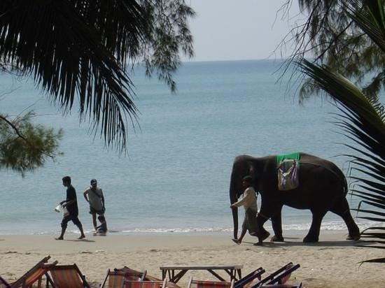 Mae Ram Phueng Beach : Beach scene