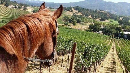 Napa Valley Horse Company: HorseOverlookingNapaValleyVineyards