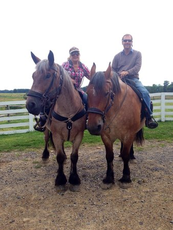 Hickory Hollow Horse Farm : The best!