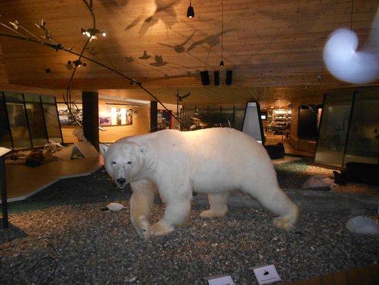 Svalbard Museum: Polar bear