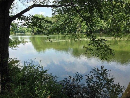 Tarrywile Park & Mansion: Parks Pond