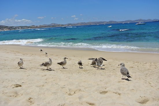 One & Only Palmilla: beautiful waters