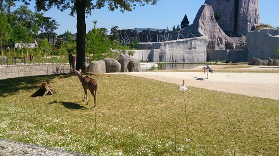 Parc Zoologique de Paris: zoo de Vincennes
