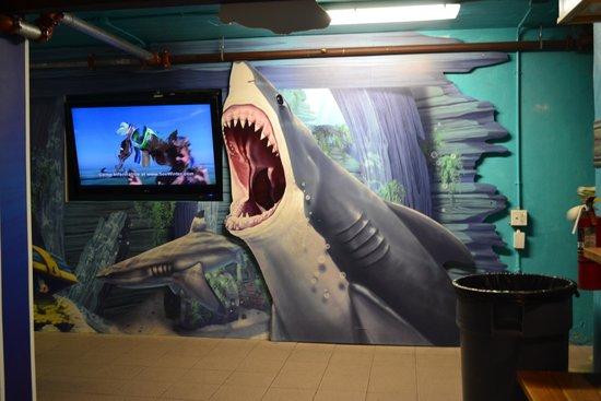 Clearwater Marine Aquarium: Tiburones
