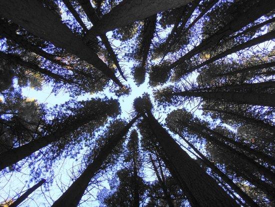 Isla Victoria: Vista de los árboles desde el suelo