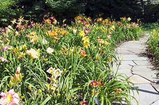 Missouri Botanical Garden: Daylily Garden