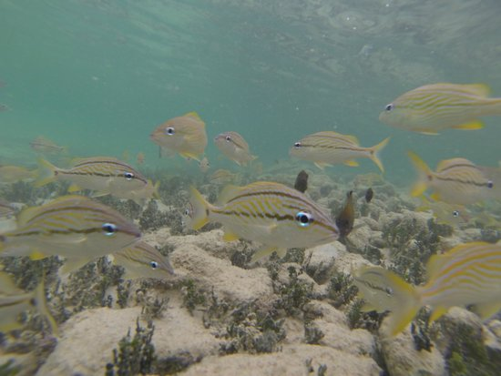 Grand Bahia Principe Jamaica: Snorkel
