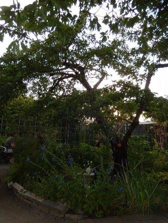 Alder Wood Bistro : More Garden Ambience