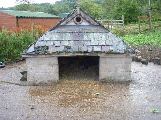 Auchingarrich Wildlife Centre: 6
