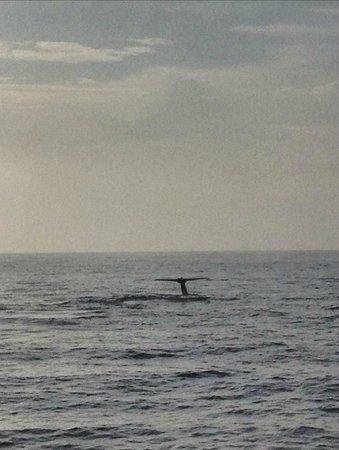 Dana Point, CA: Whale tail 3