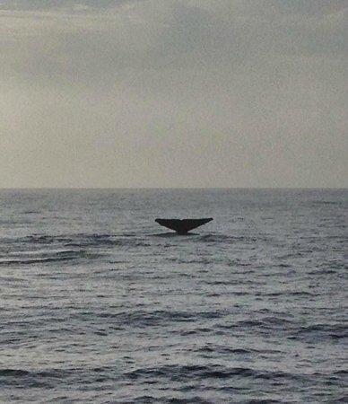 Dana Point, CA: Whale tail 2
