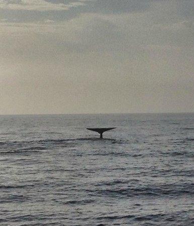 Dana Point, CA: Whale tail