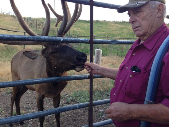 Craig, CO: Lou Wyman and Junior the Elk