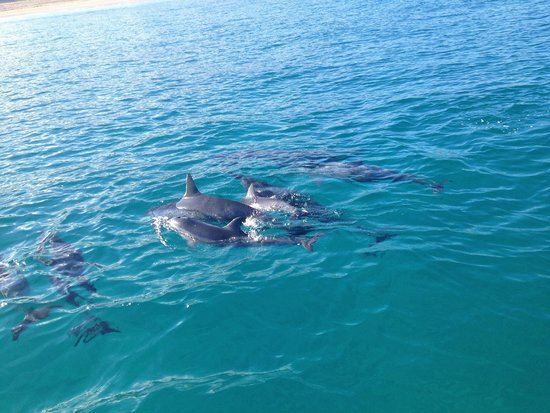 Captain Na Pali Adventures, Inc. : Dolphins every where!!