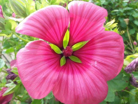 Botanischer Garten Muenchen-Nymphenburg: Beautiful pink flower