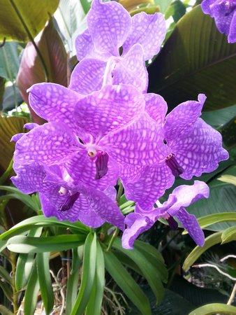 Botanischer Garten Muenchen-Nymphenburg: orchids
