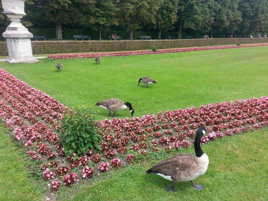 Nymphenburg Palace : Canadian Geese