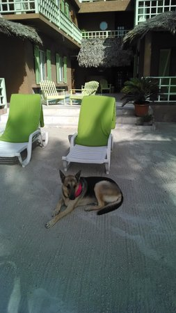 Caye Casa: Reef, the coolest dog!!