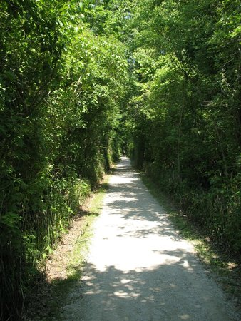 Point Pelee National Park: Unknown trail.