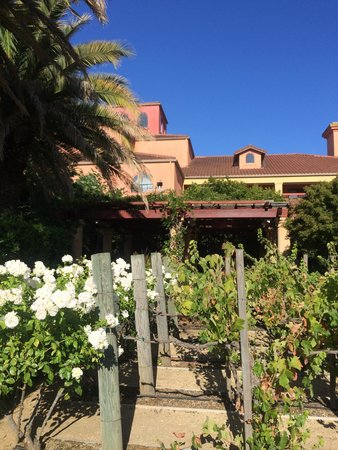 DoubleTree by Hilton Hotel Sonoma Wine Country : A rose garden outside the restaurant
