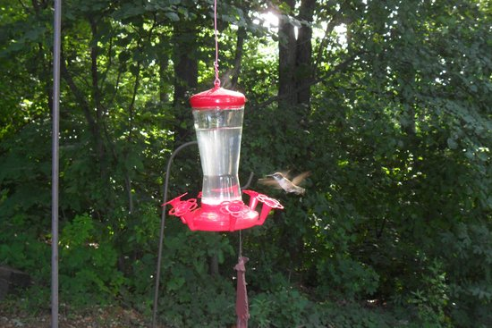 Serenity Hill Bed and Breakfast: Humming birds from